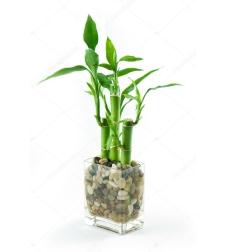 לאקי במבוק - עץ מזל עם כלי זכוכית