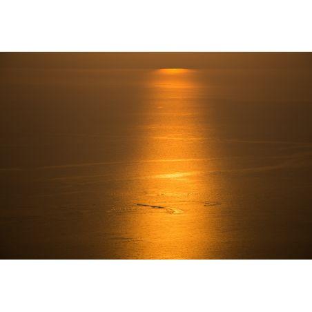 אלמוג זכאי - 11004