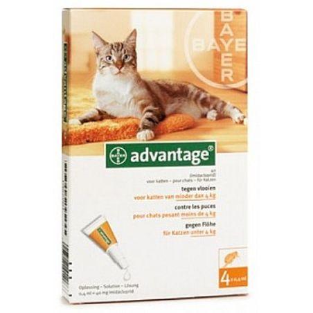 אדוונטג' חתול עד 4 קילו