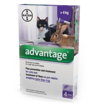 אדוונטג' חתול מעל 4 קילו
