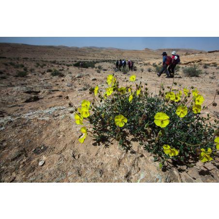 השתלמות מס' 910 -  4/11/2021 - התאמת צמחים לתנאי מדבר - הגר לשנר