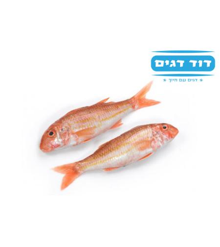 דוד דגים