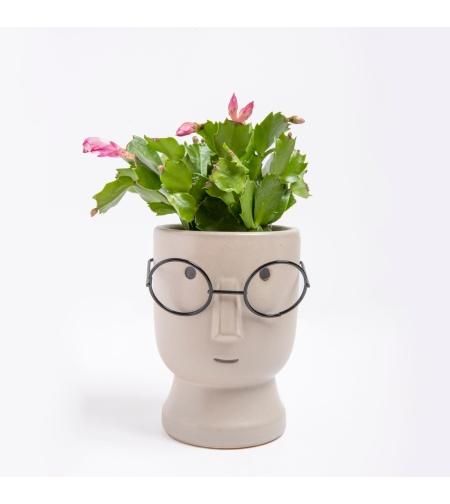 זיגוקקטוס בכלי פרצוף משקפיים