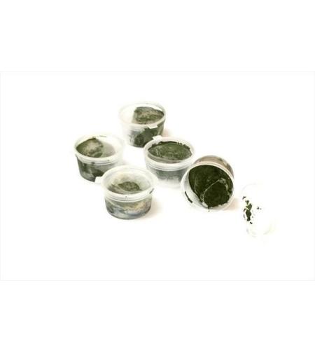ספירולינה קפואה - מארז 10 יחידות, 10 גרם ליחידה   כשרות בדץ לנדא