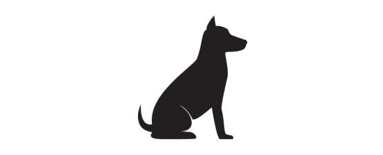 מזון וציוד לכלבים